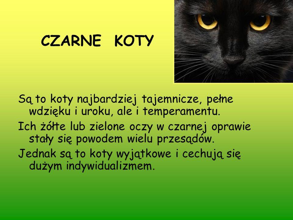 CZARNE KOTY Są to koty najbardziej tajemnicze, pełne wdzięku i uroku, ale i temperamentu.