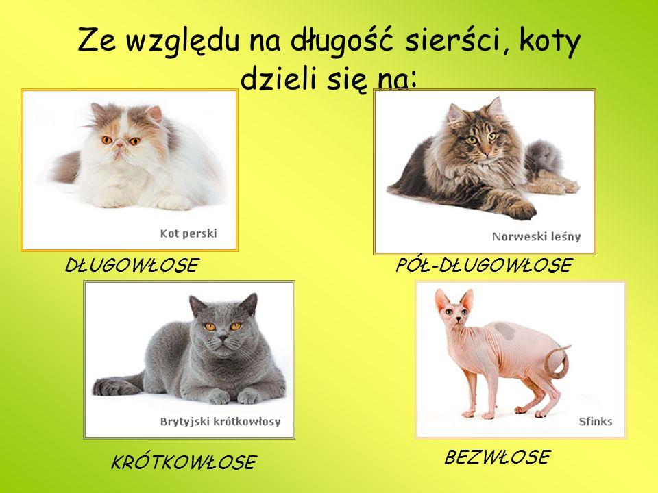 Ze względu na długość sierści, koty dzieli się na: