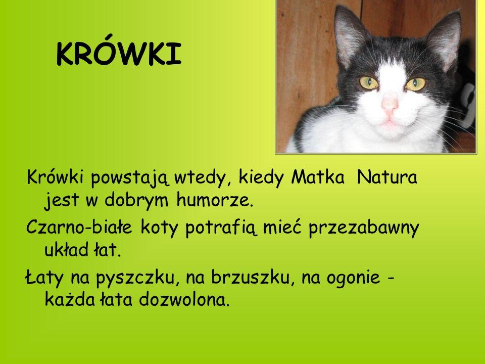 KRÓWKI Krówki powstają wtedy, kiedy Matka Natura jest w dobrym humorze. Czarno-białe koty potrafią mieć przezabawny układ łat.