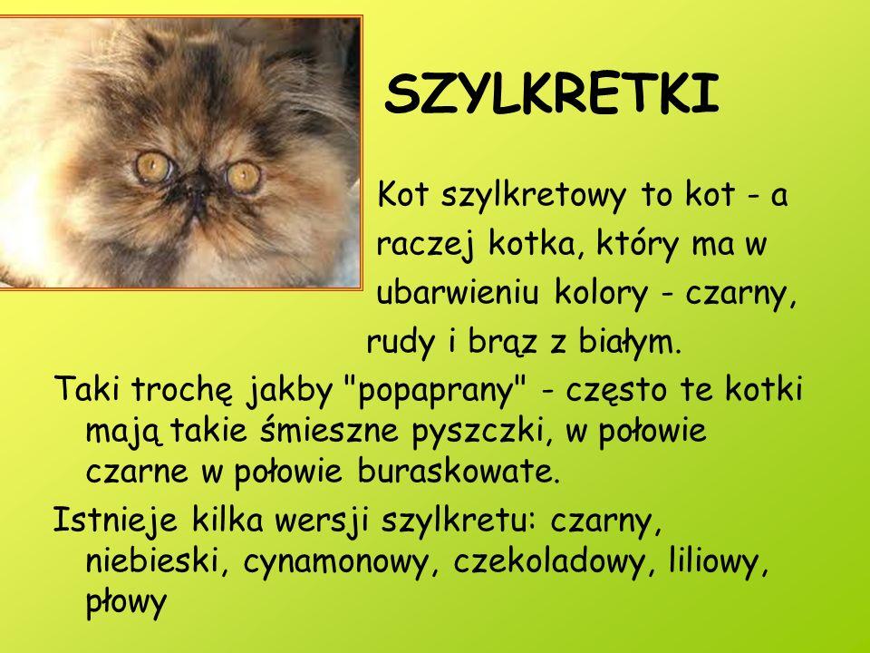 SZYLKRETKI Kot szylkretowy to kot - a raczej kotka, który ma w