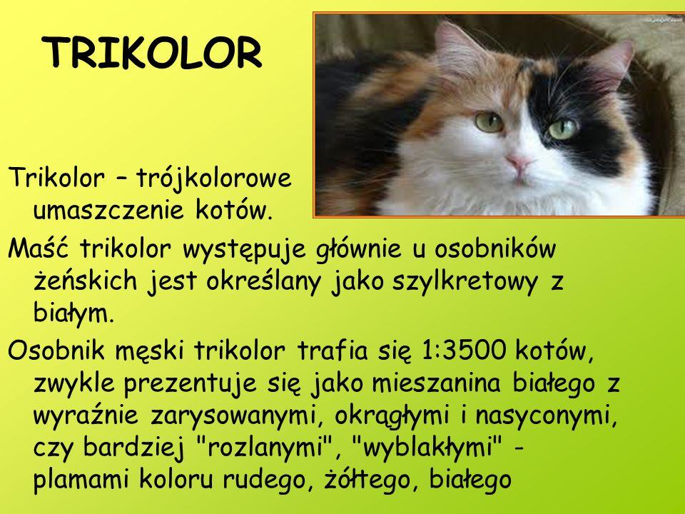 TRIKOLOR Trikolor – trójkolorowe umaszczenie kotów.