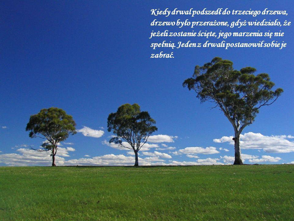 Kiedy drwal podszedł do trzeciego drzewa, drzewo było przerażone, gdyż wiedziało, że jeżeli zostanie ścięte, jego marzenia się nie
