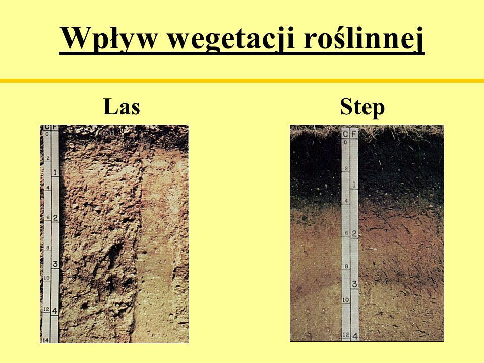 Wpływ wegetacji roślinnej