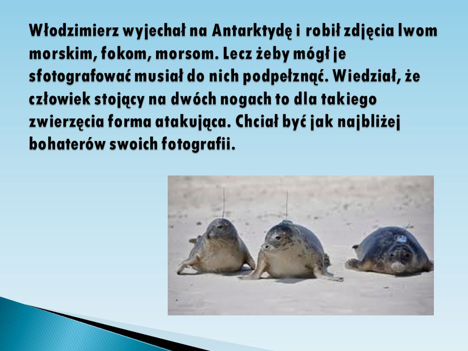 Włodzimierz wyjechał na Antarktydę i robił zdjęcia lwom morskim, fokom, morsom.