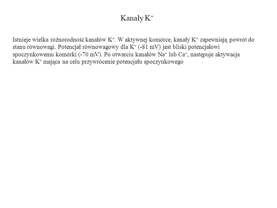 Kanały K+