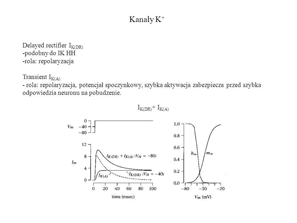Kanały K+ Delayed rectifier IK(DR) podobny do IK HH