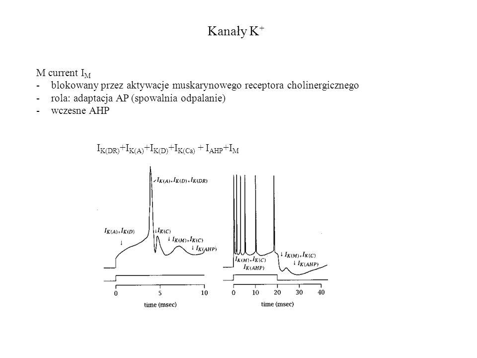 Kanały K+ M current IM. blokowany przez aktywacje muskarynowego receptora cholinergicznego. rola: adaptacja AP (spowalnia odpalanie)