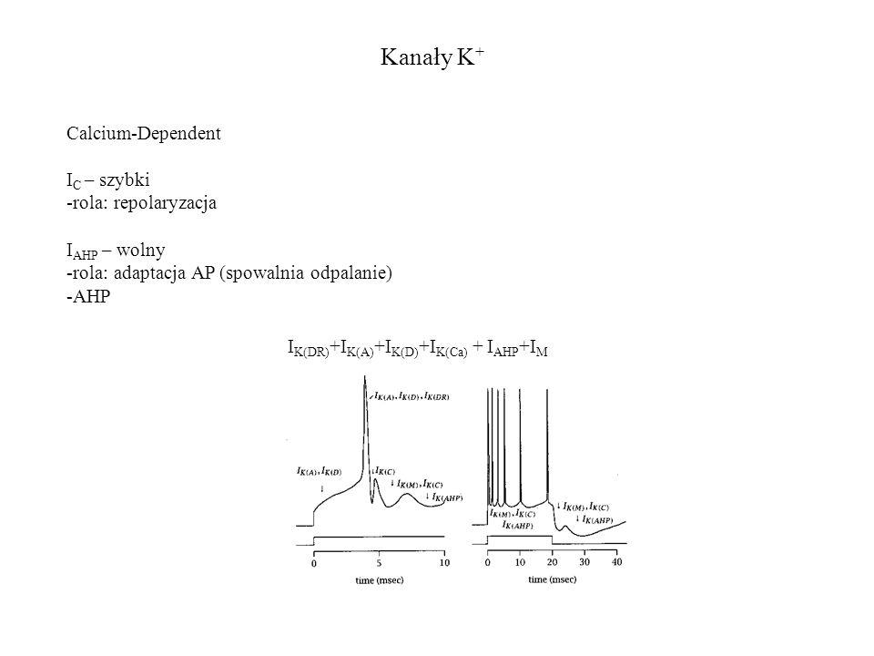 Kanały K+ Calcium-Dependent IC – szybki rola: repolaryzacja