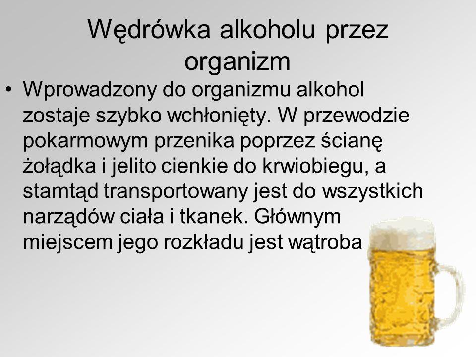 Wędrówka alkoholu przez organizm