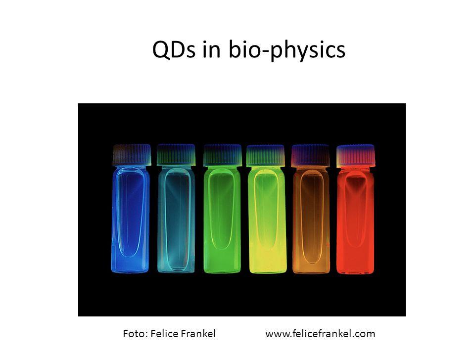 QDs in bio-physics Foto: Felice Frankel www.felicefrankel.com