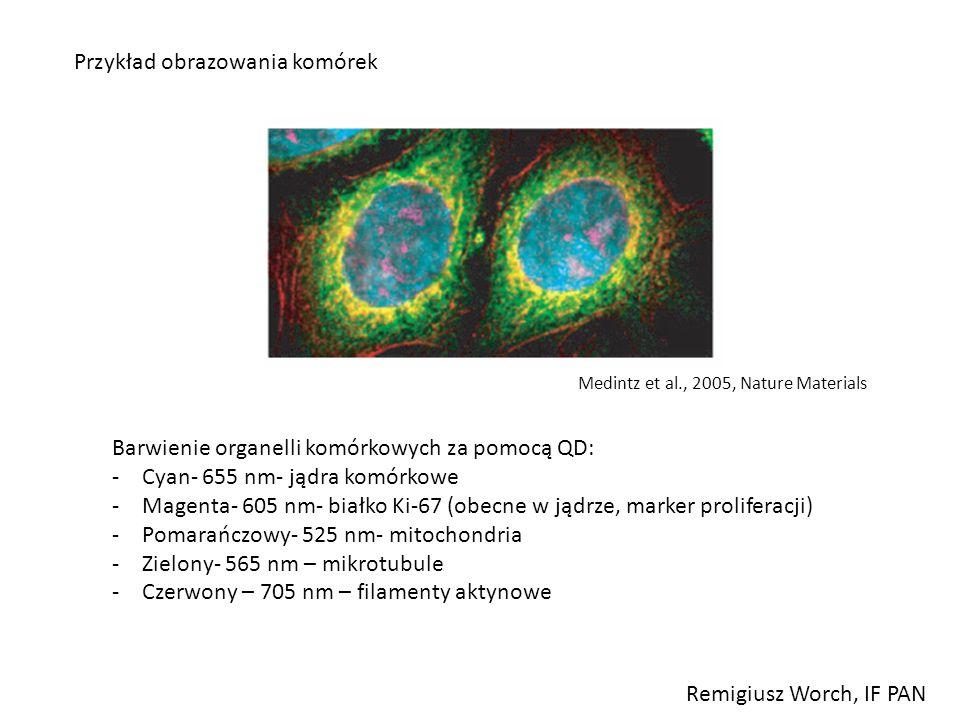 Przykład obrazowania komórek