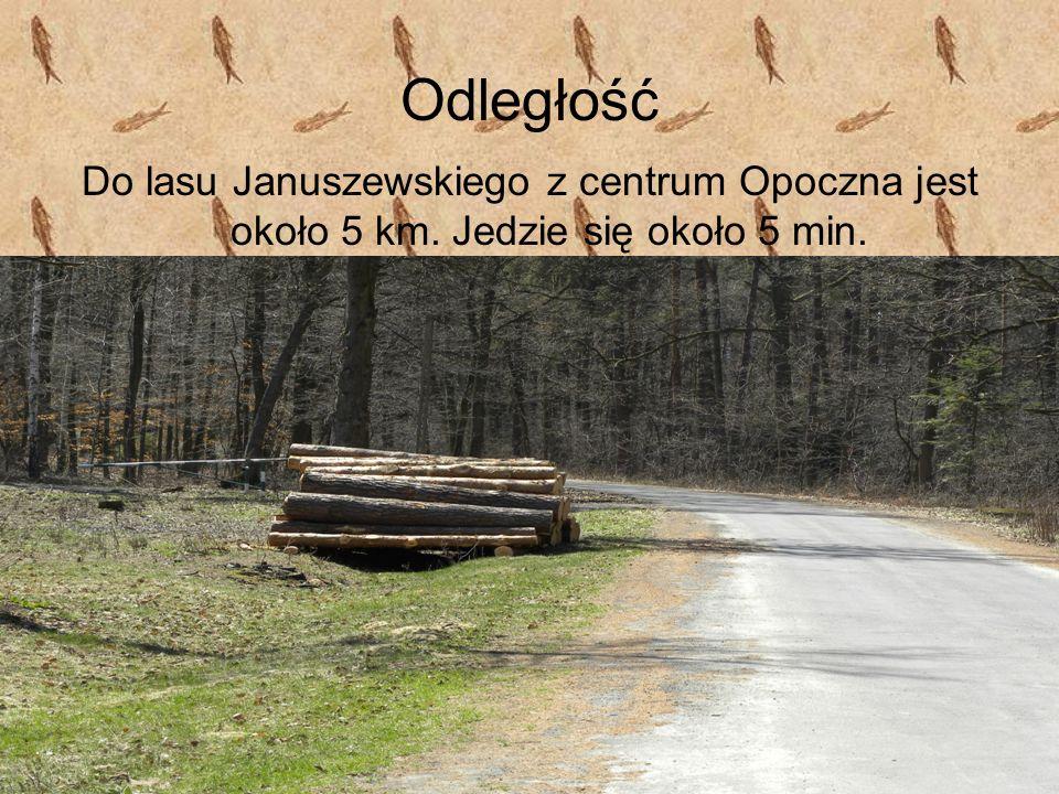 Odległość Do lasu Januszewskiego z centrum Opoczna jest około 5 km. Jedzie się około 5 min.