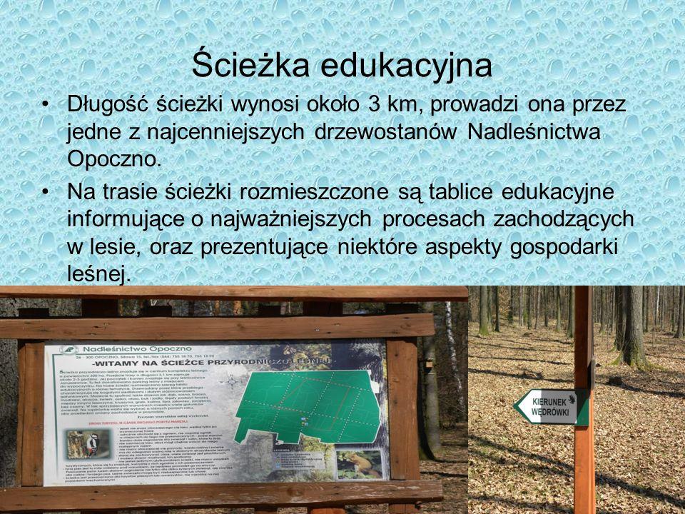 Ścieżka edukacyjna Długość ścieżki wynosi około 3 km, prowadzi ona przez jedne z najcenniejszych drzewostanów Nadleśnictwa Opoczno.
