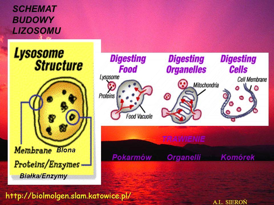 Pokarmów Organelli Komórek