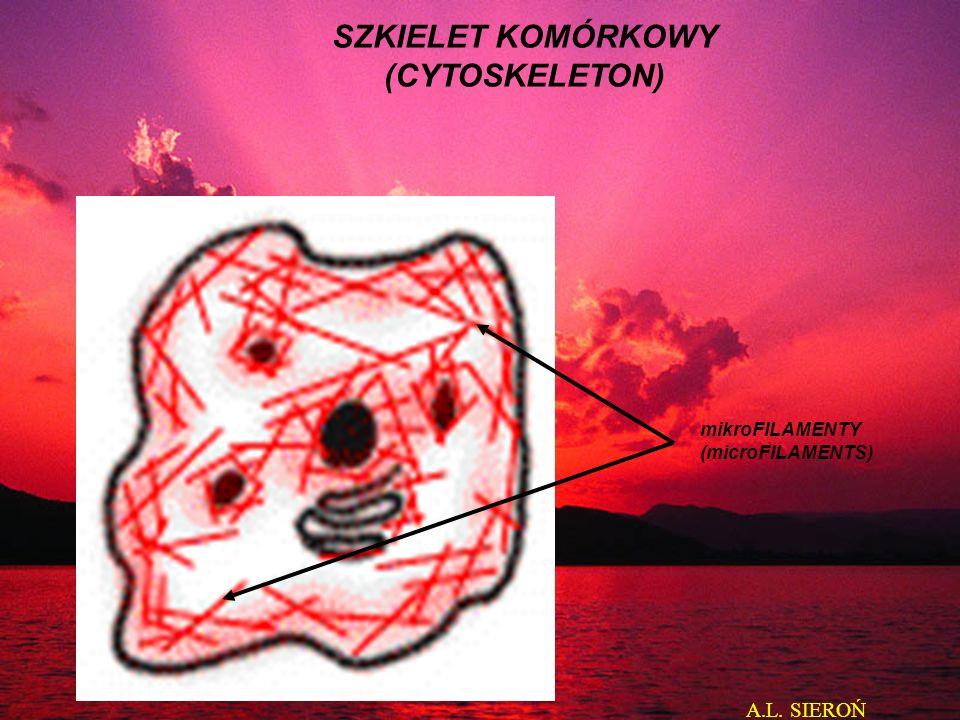 SZKIELET KOMÓRKOWY (CYTOSKELETON)