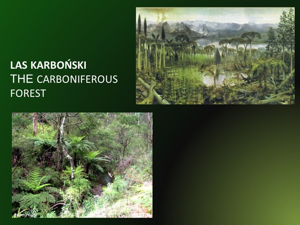 LAS KARBOŃSKI THE CARBONIFEROUS FOREST