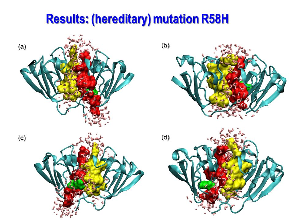 Results: (hereditary) mutation R58H