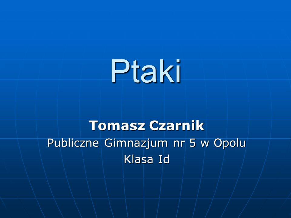 Tomasz Czarnik Publiczne Gimnazjum nr 5 w Opolu Klasa Id
