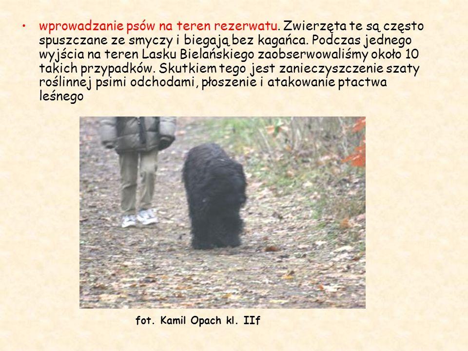 wprowadzanie psów na teren rezerwatu