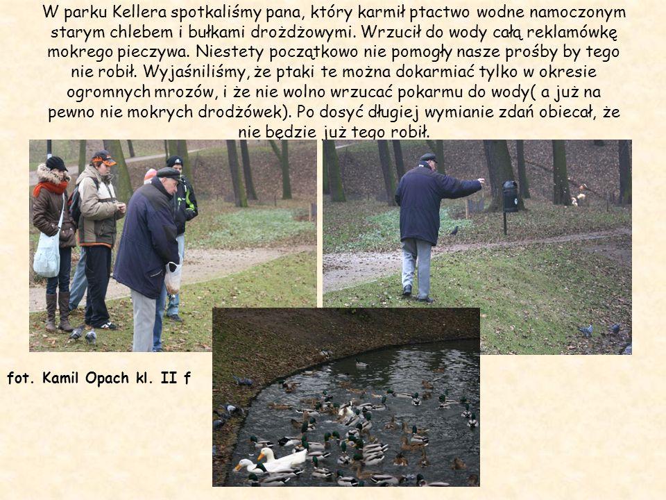 W parku Kellera spotkaliśmy pana, który karmił ptactwo wodne namoczonym starym chlebem i bułkami drożdżowymi. Wrzucił do wody całą reklamówkę mokrego pieczywa. Niestety początkowo nie pomogły nasze prośby by tego nie robił. Wyjaśniliśmy, że ptaki te można dokarmiać tylko w okresie ogromnych mrozów, i że nie wolno wrzucać pokarmu do wody( a już na pewno nie mokrych drodżówek). Po dosyć długiej wymianie zdań obiecał, że nie będzie już tego robił.
