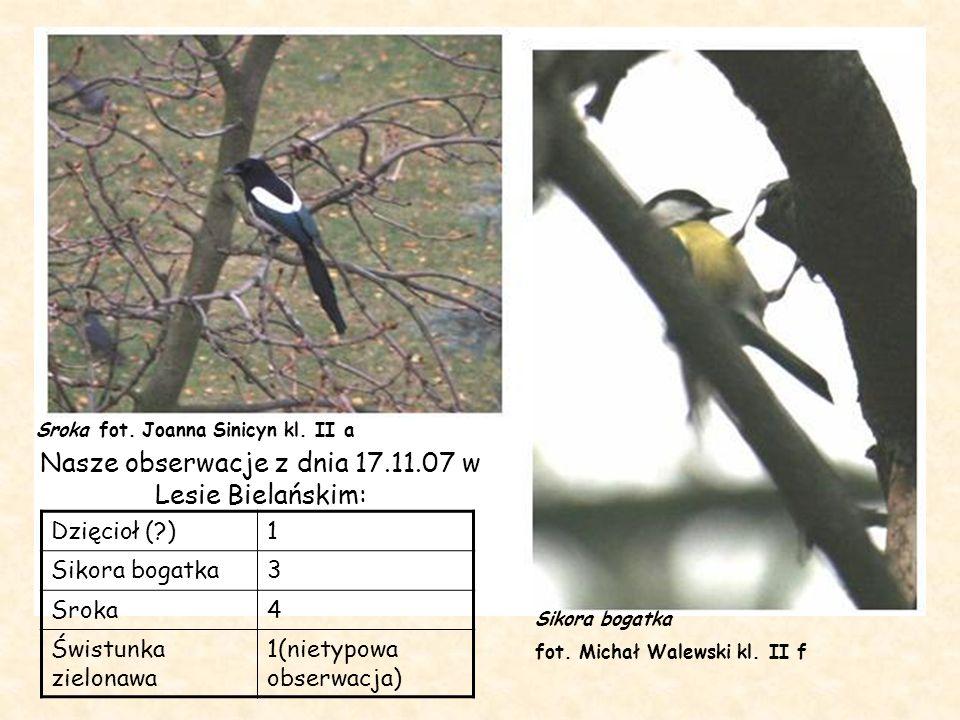 Nasze obserwacje z dnia 17.11.07 w Lesie Bielańskim: