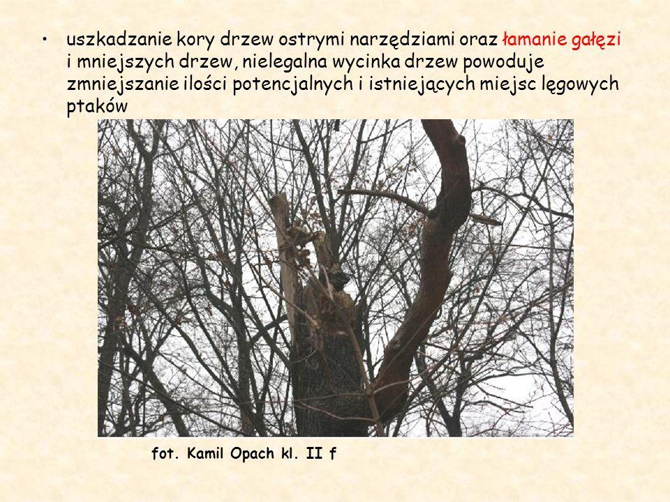 uszkadzanie kory drzew ostrymi narzędziami oraz łamanie gałęzi i mniejszych drzew, nielegalna wycinka drzew powoduje zmniejszanie ilości potencjalnych i istniejących miejsc lęgowych ptaków