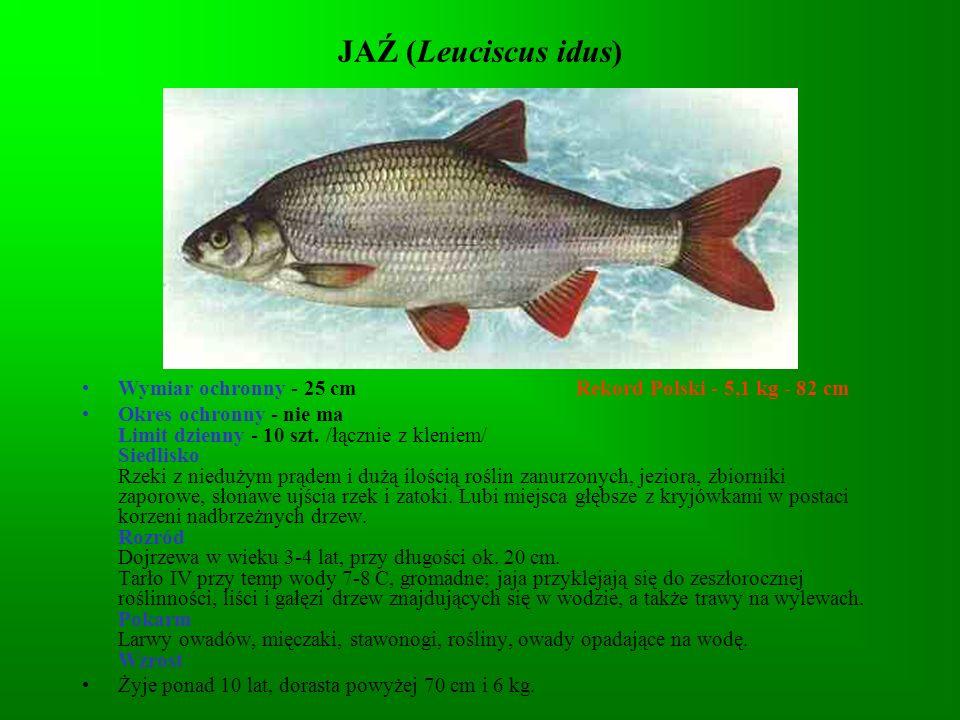 JAŹ (Leuciscus idus)Wymiar ochronny - 25 cm Rekord Polski - 5,1 kg - 82 cm.