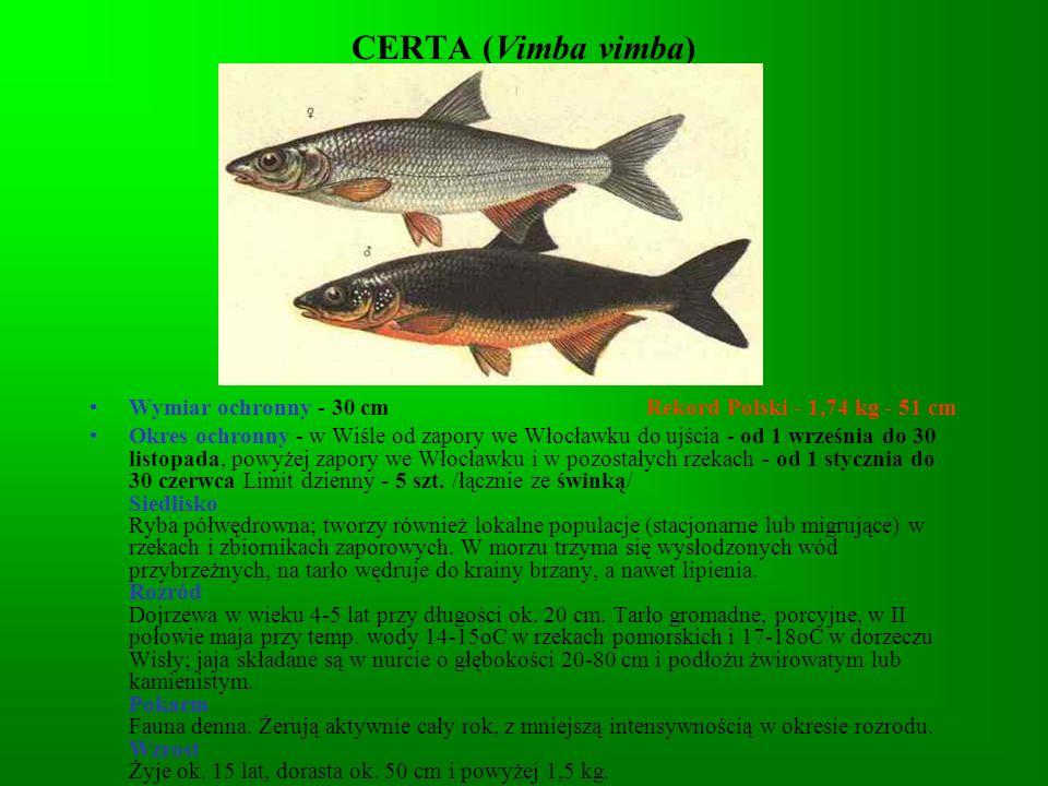 CERTA (Vimba vimba) Wymiar ochronny - 30 cm Rekord Polski - 1,74 kg - 51 cm.