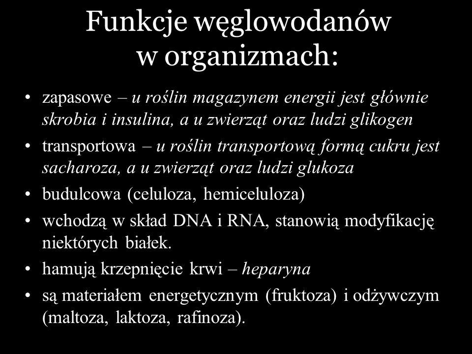 Funkcje węglowodanów w organizmach: