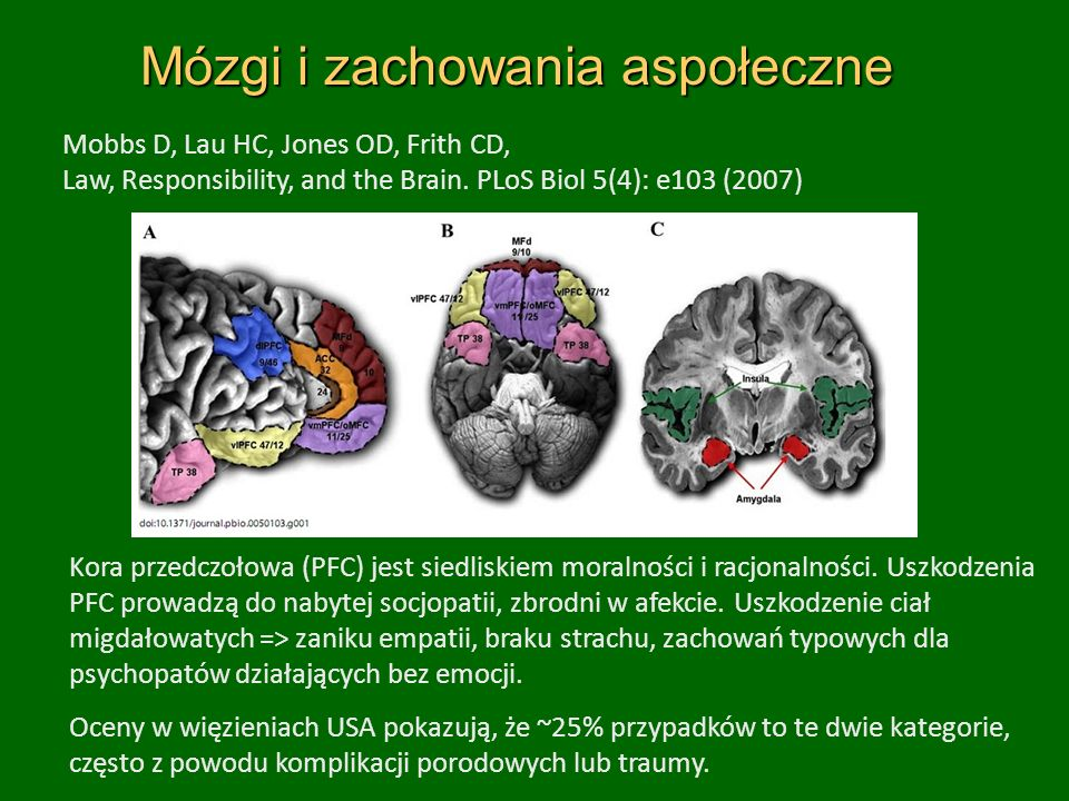 Mózgi i zachowania aspołeczne