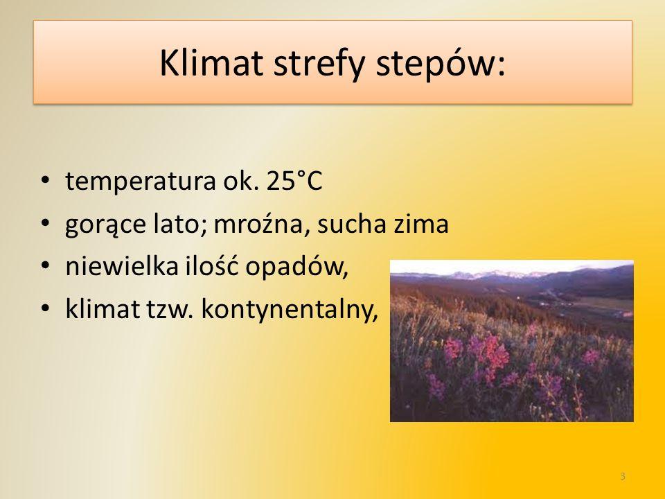 Klimat strefy stepów: temperatura ok. 25°C