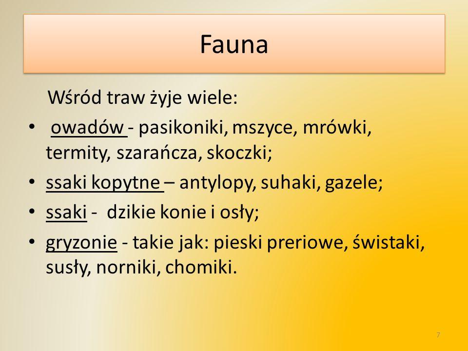 Fauna Wśród traw żyje wiele: