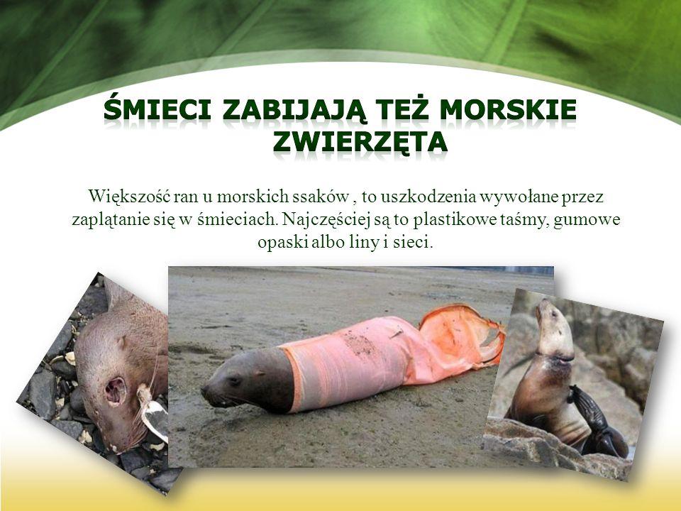 Śmieci zabijają też morskie zwierzęta