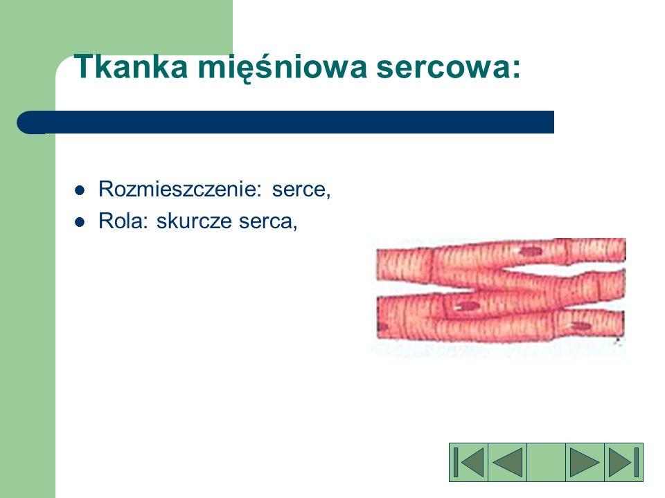 Tkanka mięśniowa sercowa: