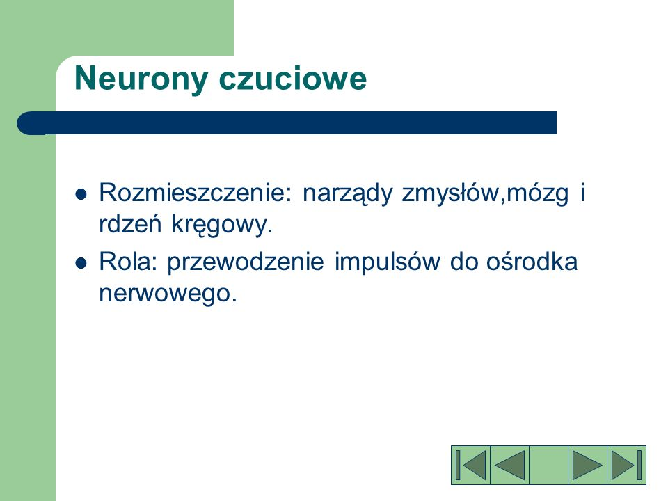 Neurony czuciowe Rozmieszczenie: narządy zmysłów,mózg i rdzeń kręgowy.