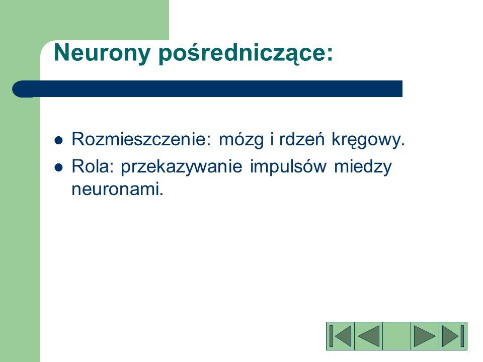 Neurony pośredniczące: