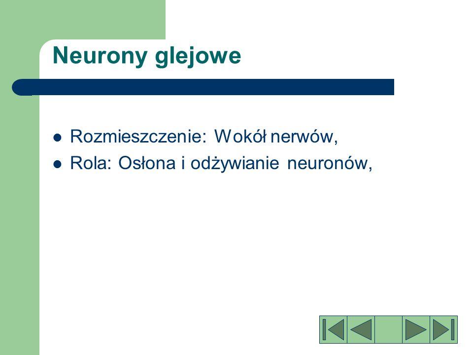 Neurony glejowe Rozmieszczenie: Wokół nerwów,