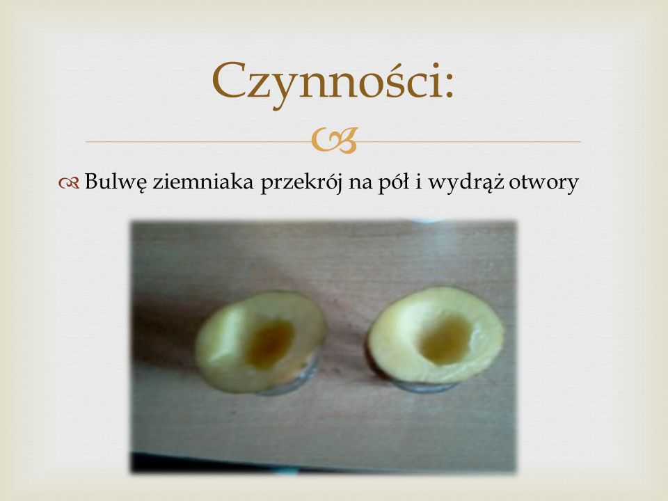 Czynności: Bulwę ziemniaka przekrój na pół i wydrąż otwory