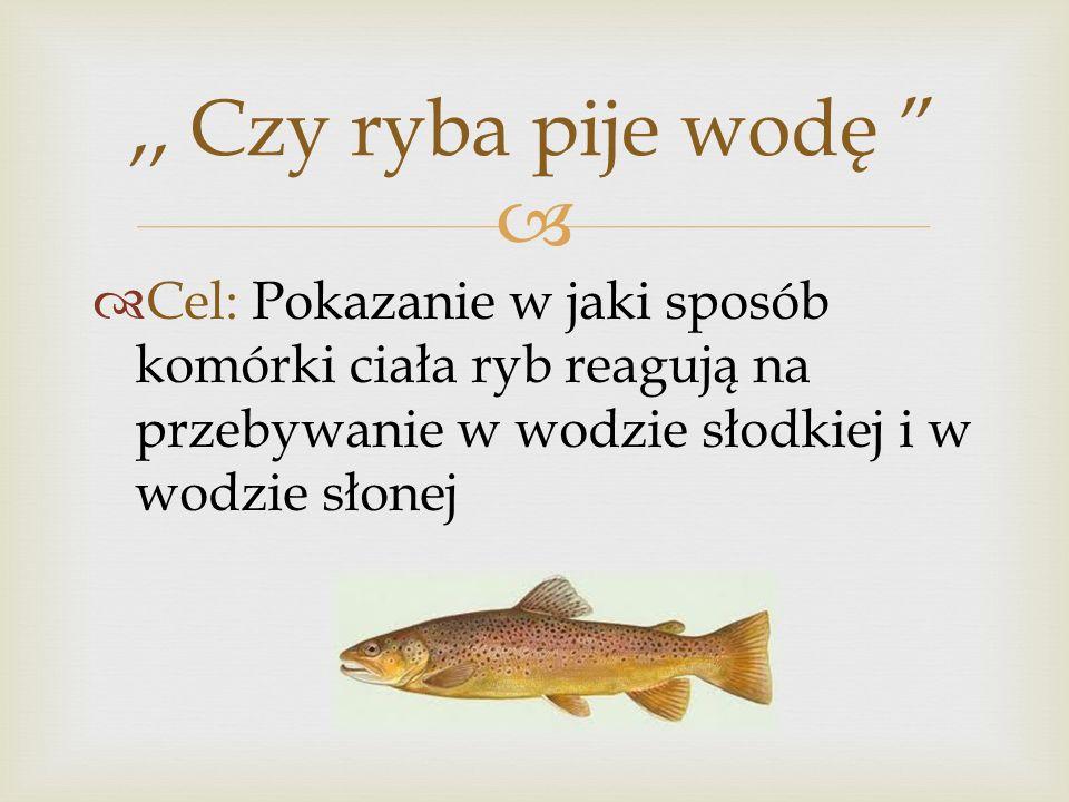 ,, Czy ryba pije wodę Cel: Pokazanie w jaki sposób komórki ciała ryb reagują na przebywanie w wodzie słodkiej i w wodzie słonej.