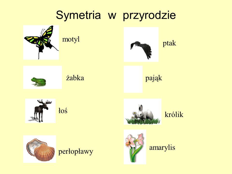 Symetria w przyrodzie motyl ptak żabka pająk łoś królik amarylis