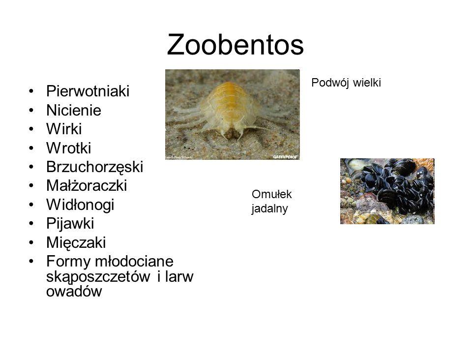 Zoobentos Pierwotniaki Nicienie Wirki Wrotki Brzuchorzęski Małżoraczki