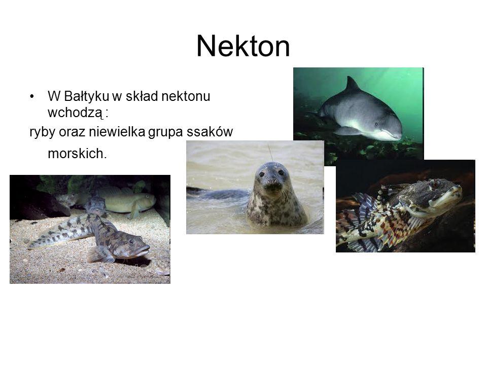 Nekton W Bałtyku w skład nektonu wchodzą :