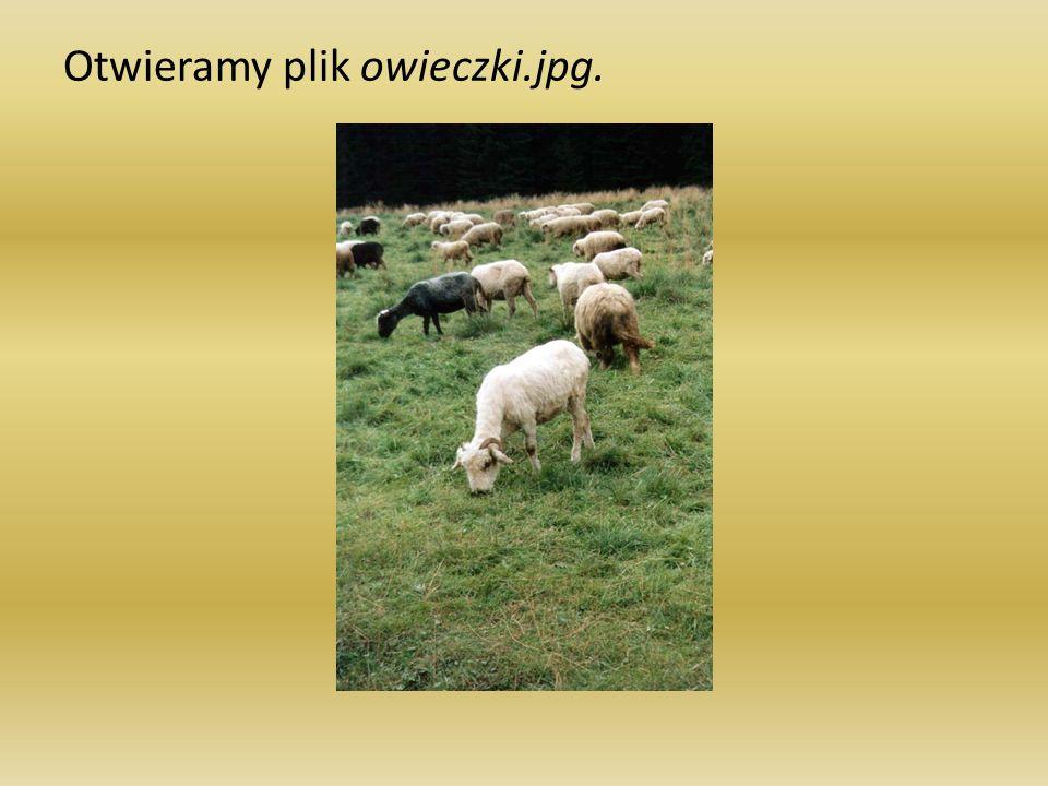 Otwieramy plik owieczki.jpg.