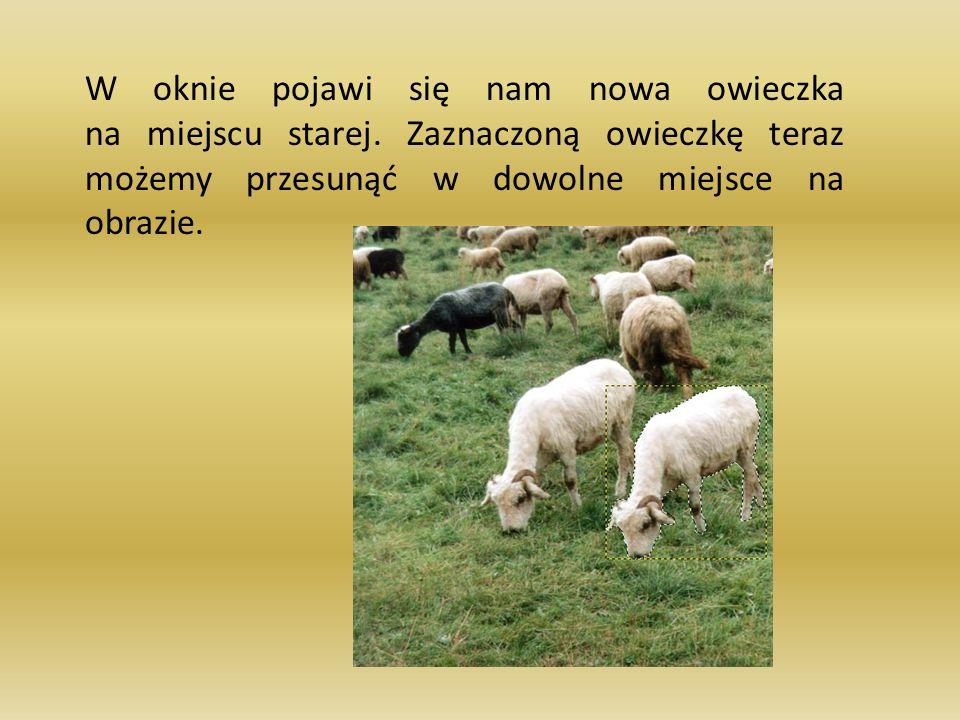 W oknie pojawi się nam nowa owieczka na miejscu starej