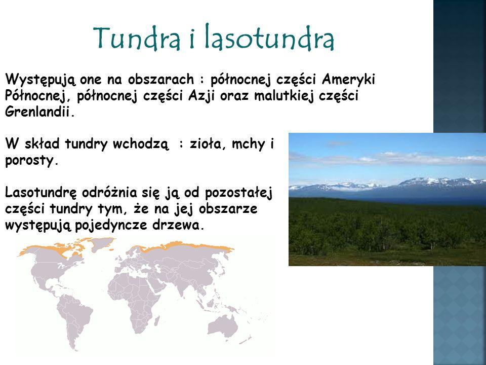 Tundra i lasotundra Występują one na obszarach : północnej części Ameryki Północnej, północnej części Azji oraz malutkiej części Grenlandii.