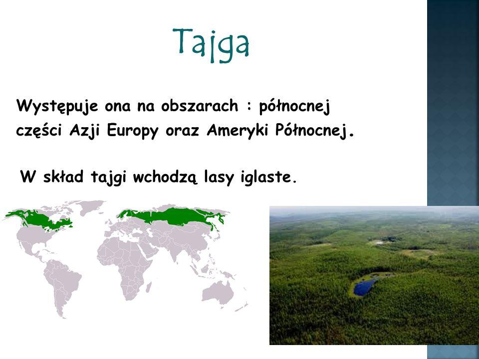 Tajga Występuje ona na obszarach : północnej części Azji Europy oraz Ameryki Północnej.