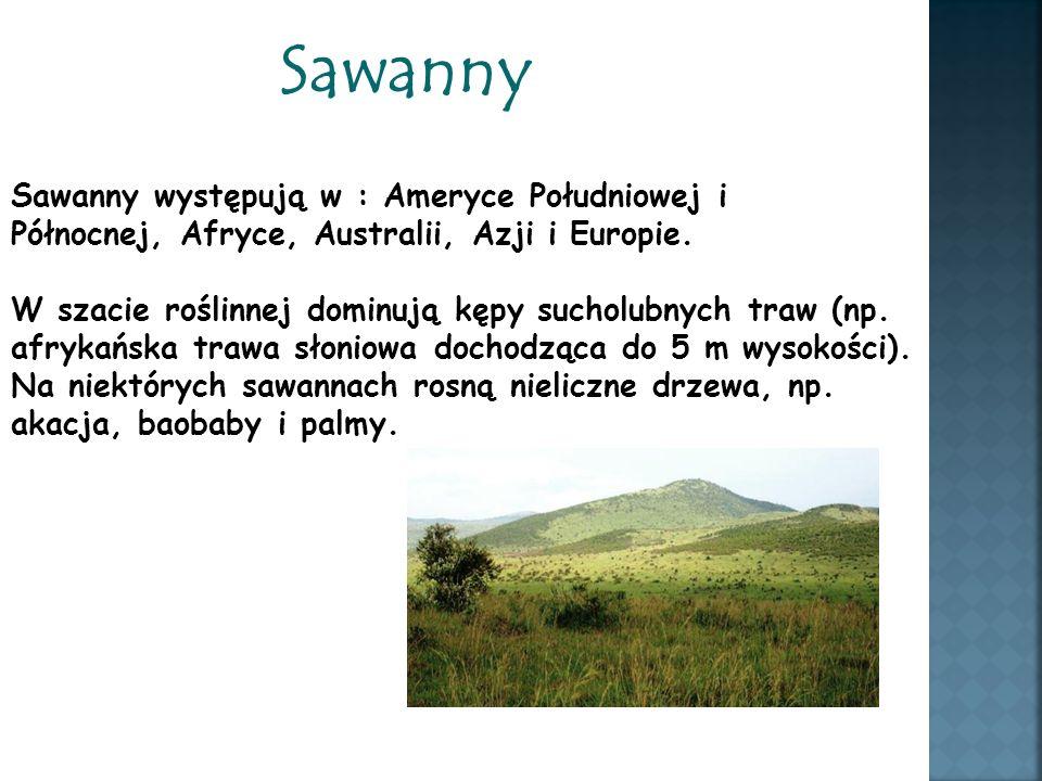 Sawanny Sawanny występują w : Ameryce Południowej i Północnej, Afryce, Australii, Azji i Europie.