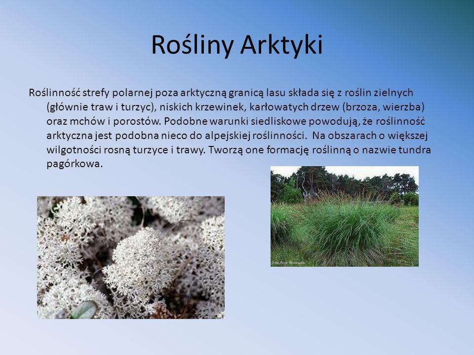 Rośliny Arktyki