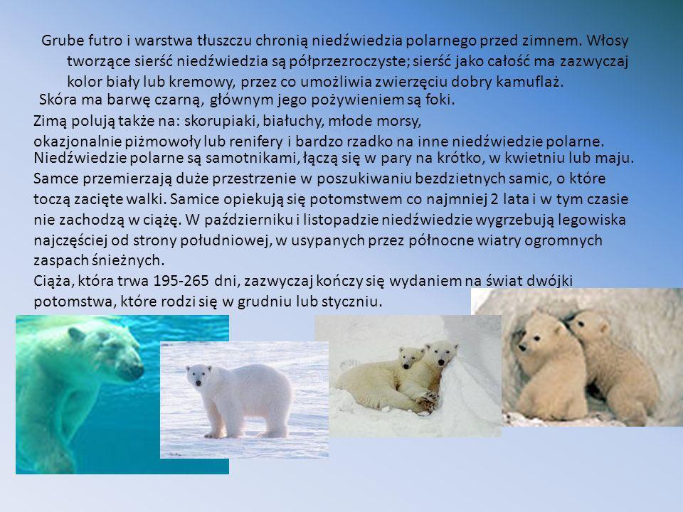 Grube futro i warstwa tłuszczu chronią niedźwiedzia polarnego przed zimnem. Włosy tworzące sierść niedźwiedzia są półprzezroczyste; sierść jako całość ma zazwyczaj kolor biały lub kremowy, przez co umożliwia zwierzęciu dobry kamuflaż.