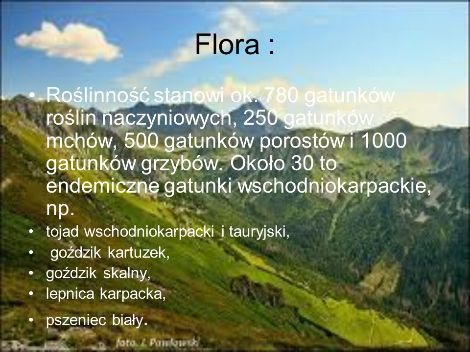 Flora :